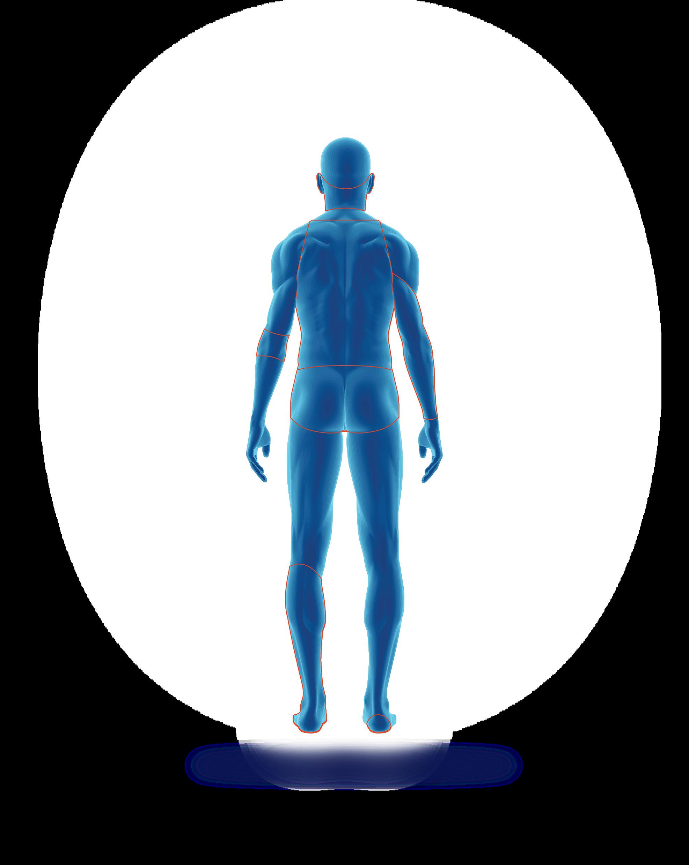 Human back
